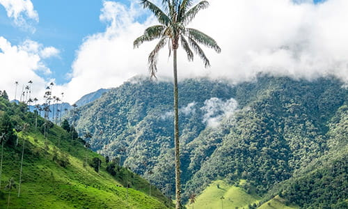 wax-palm-tree-at-popular-backpacker-destination-cocora-valley-in-colombia.jpg